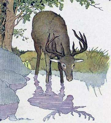 THE STAG AND HIS REFLECTION