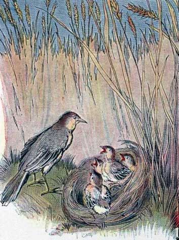 THE LARK AND HER YOUNG ONES